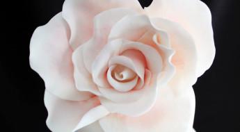 rose dita