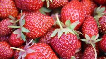 fraises acc